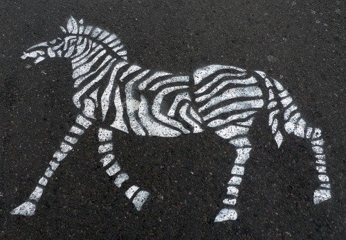 Zebra's crossing